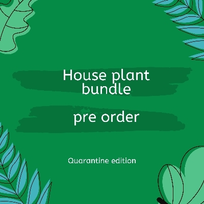 Houseplant bundle, quarantine edition